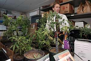Pot Trafficking Bust