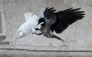 Dove y Cuervo